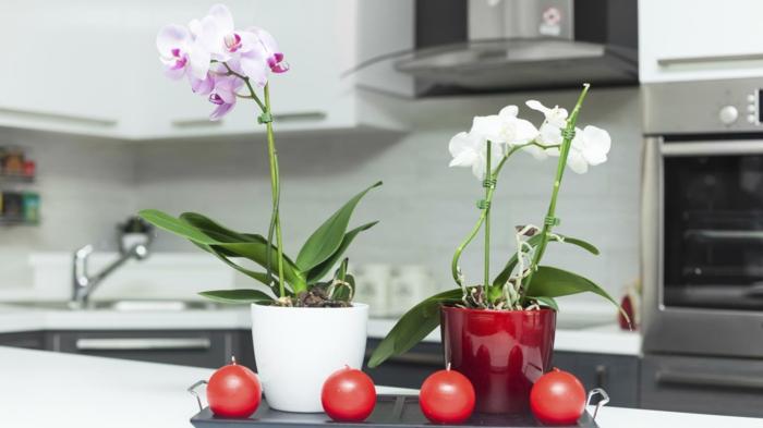 deco zen, couleur zen, éléments intérieur bouddha avec des pots en rouge et blanc, quatre bougies en forme de boules rouges posées sur un plat noir