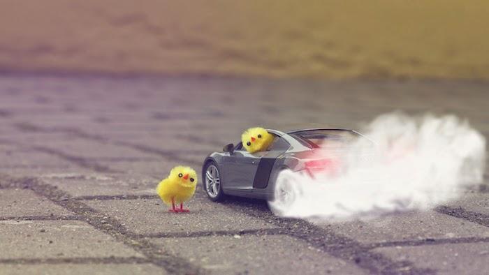 Image fond d écran iphone fond d écran humoristique image drole poussins qui conduisent voiture