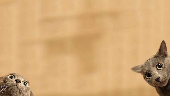 Image pour fond ecran fond d écran moderne choisir une image rigolote chats