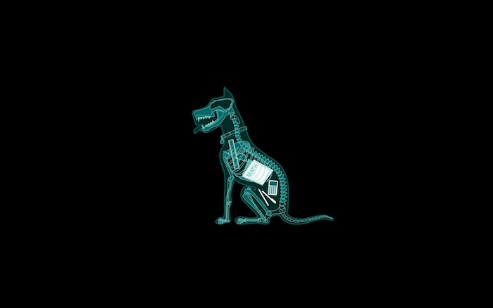 Fond ecran original radiographie chien image drole pour fond d écran photo amusante
