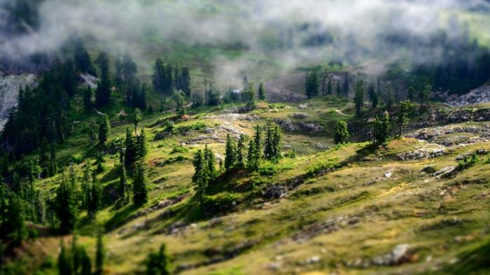montagne avec des sapins éparpillés sur les pentes, nuages blancs transparents qui créent une ambiance mystique, paysage rocheux, paysage paradisiaque