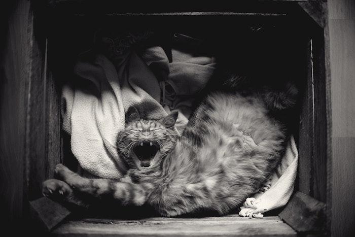 Fond d écran pour garçon image drole pour fond d écran simple chat dans basket adorable photo noir et blanc