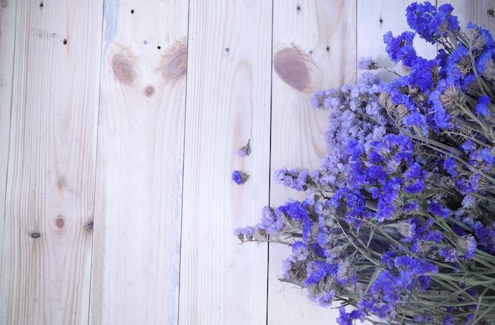 Nature fond d'écran fleuri fond d'écran fleur photo champetre photo originale