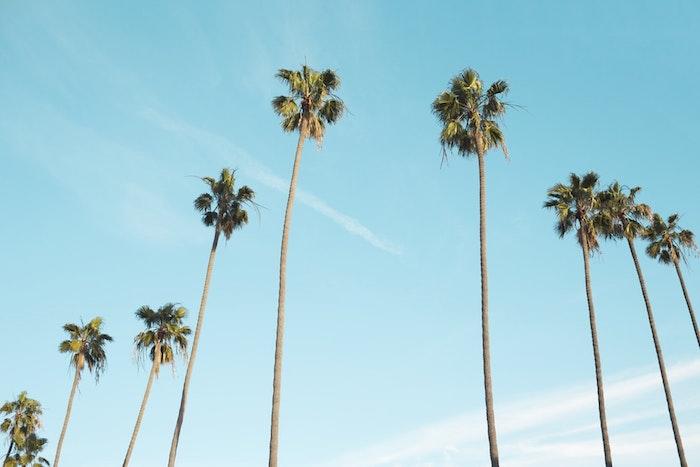 Mignon fond d'écran cool fond d'écran été couleurs pastel originale idée plage palmes
