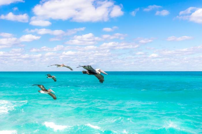 lieu paradisiaque, paysage paradisiaque, océan eaux bleues, des pelikans qui volent, nuages blancs tout petits qui couvrent l'horizon entier