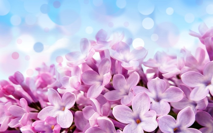 Picture fond d'écran printemps fond d'écran fleurs jolies roses et fond bleu cool idée pour un fond d écran fleur