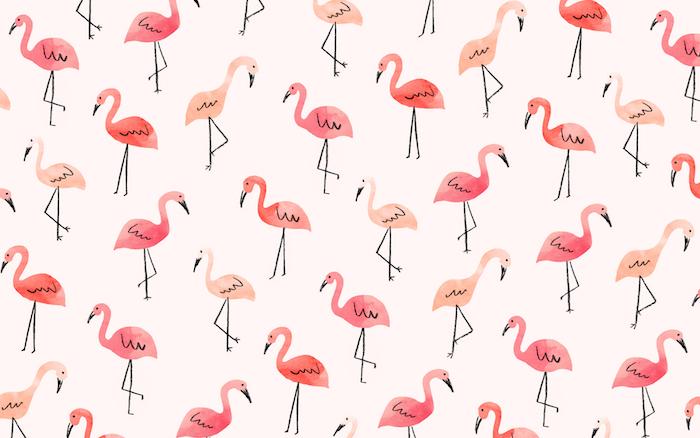 Joli fond d'écran simple fond ecran ordinateur fond d'écran flamingos