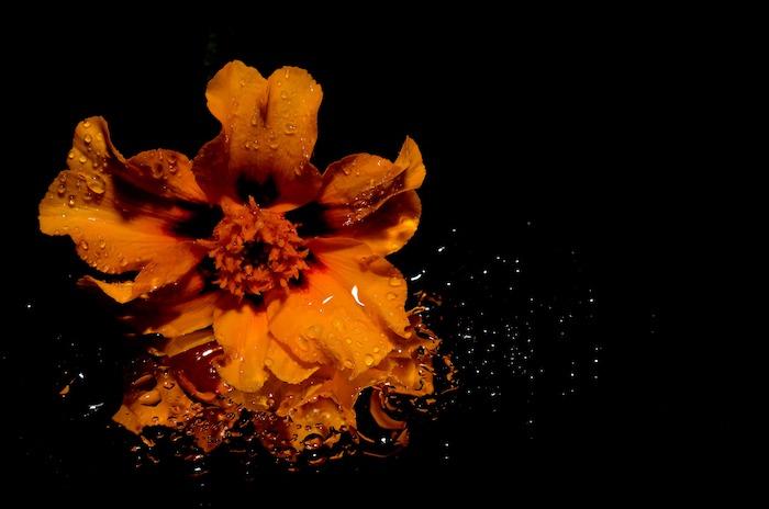 Fond d'écran printemps gratuit pour ordinateur image orange fleur