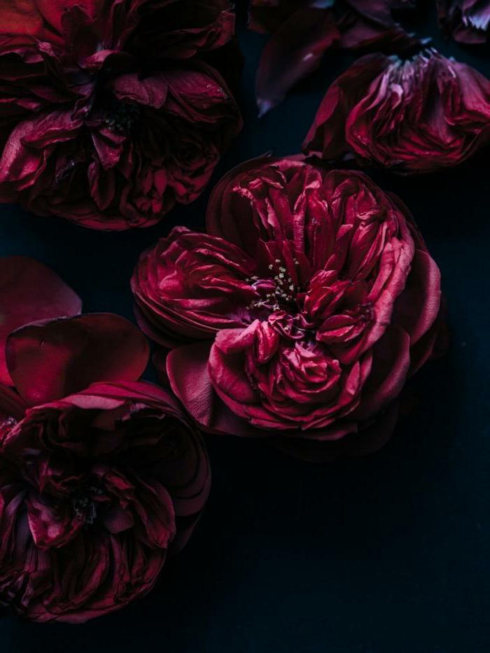 bouquet couleur bordeau, fleurs rouges, décorer l'intérieur avec des fleurs