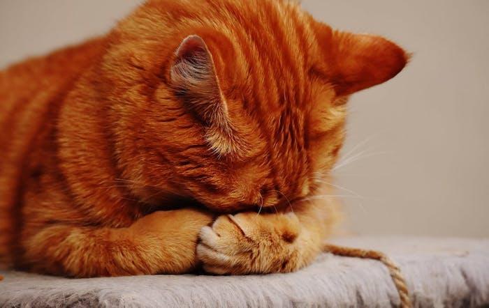 Adorable fond d écran animaux drole image chat fond d écran trop drole hd amusante photo