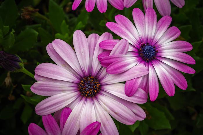 Photo bouquet de fleurs fond d'écran fleuri photo jolie fleur violet