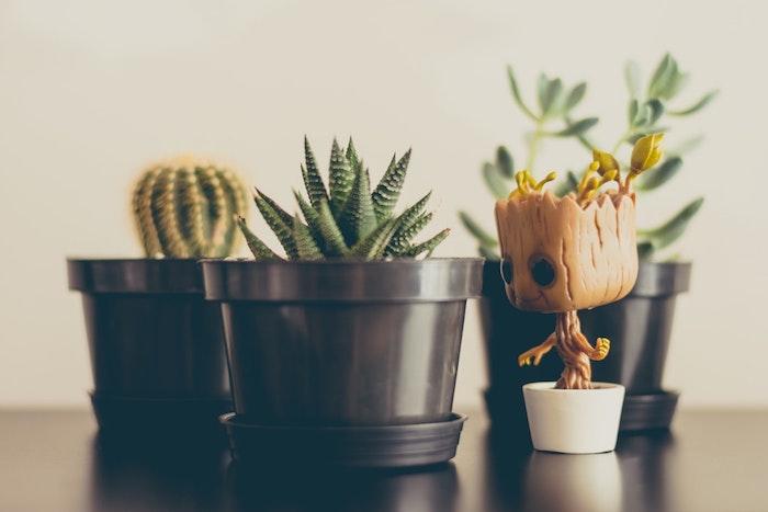 Fond d écran original photo pour fond d écran idée image arriere plan plantes adorable