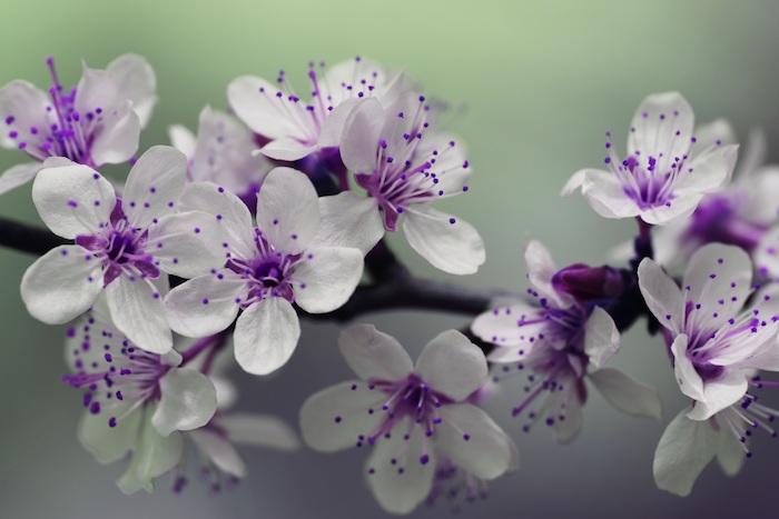 Qualité image fond d'écran gratuit fleurs fleur fond ecran branche fleurie printemps