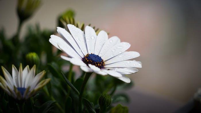 Ravissante photo pour fond d'écran gratuit fleurs de printemps flleurs blanches