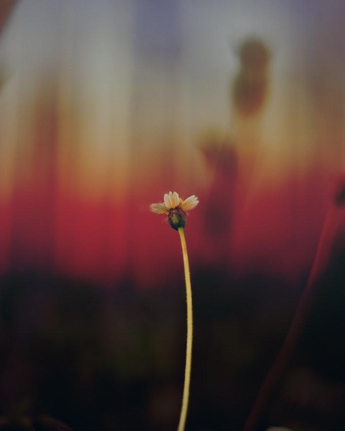 Image de fleur fond d'écran printemps idée fleur photo fleur