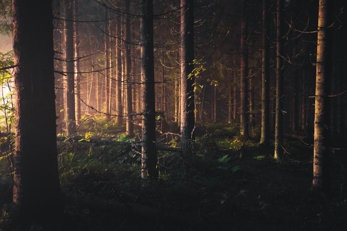photo aube dans une forêt, beau fond d écran sombre qui montre la nature dans une forêt au gazon vert