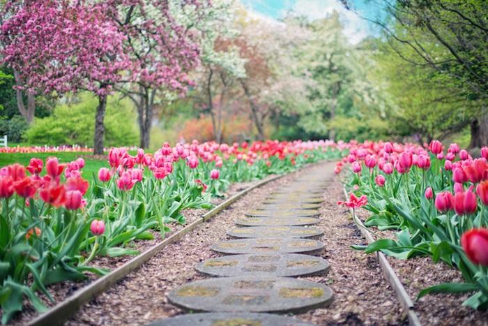 Image fleur photo bouquet de fleurs fond d'écran printemps chemin fleurie