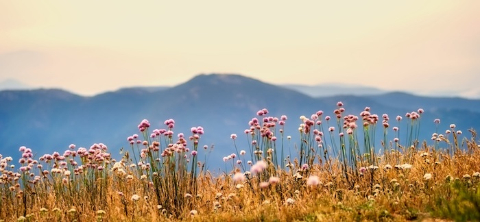 Jolie photo pour fond d'écran photo des fleurs photographie paysage fond d'écran été