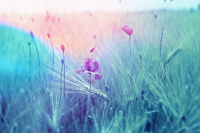 La meilleure image de fleur fond ecran printemps adorable fond d'écran