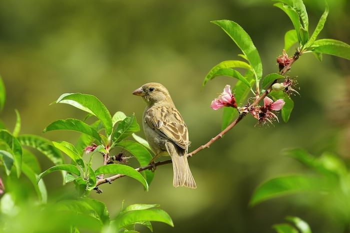 Picturesque fond ecran printemps fond d'écran fleur oiseau sur branche fleurie fond d'écran