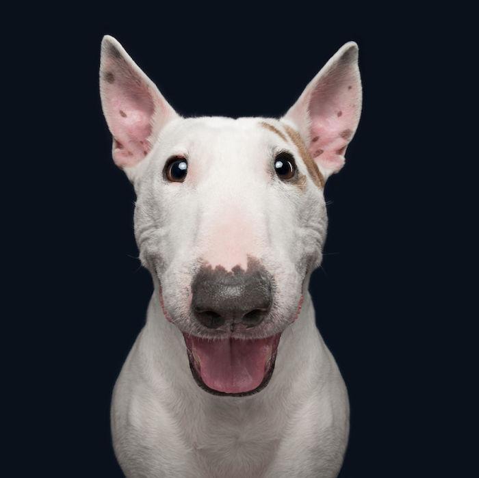 Idée fond d écran d animaux fond d écran humour fond ecran drole image