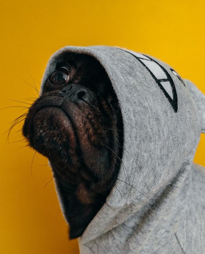 Fond d écran supreme fond d écran pour ordinateur image wallpaper swag chien pug