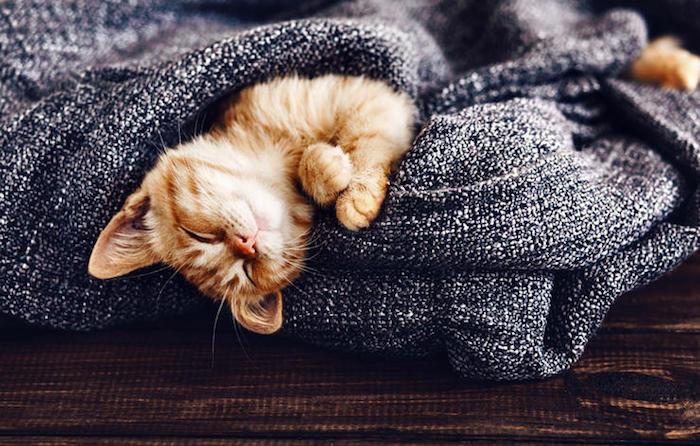Chaton mignon couverture scandinave le style de vie danois hygge deco