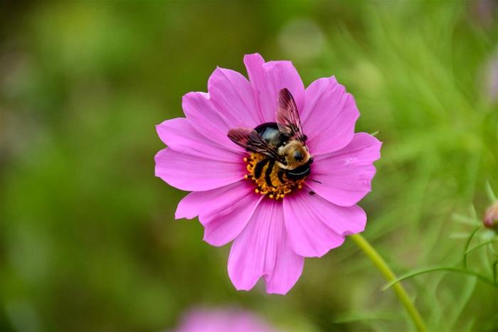 Images arrière plan bureau gratuit fond ecran fleurs d été