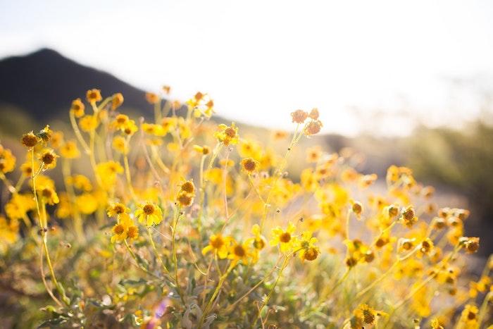 Merveilleuse image fond d'écran gratuit printemps jaunes fleurs cool image paysage fond d ecran
