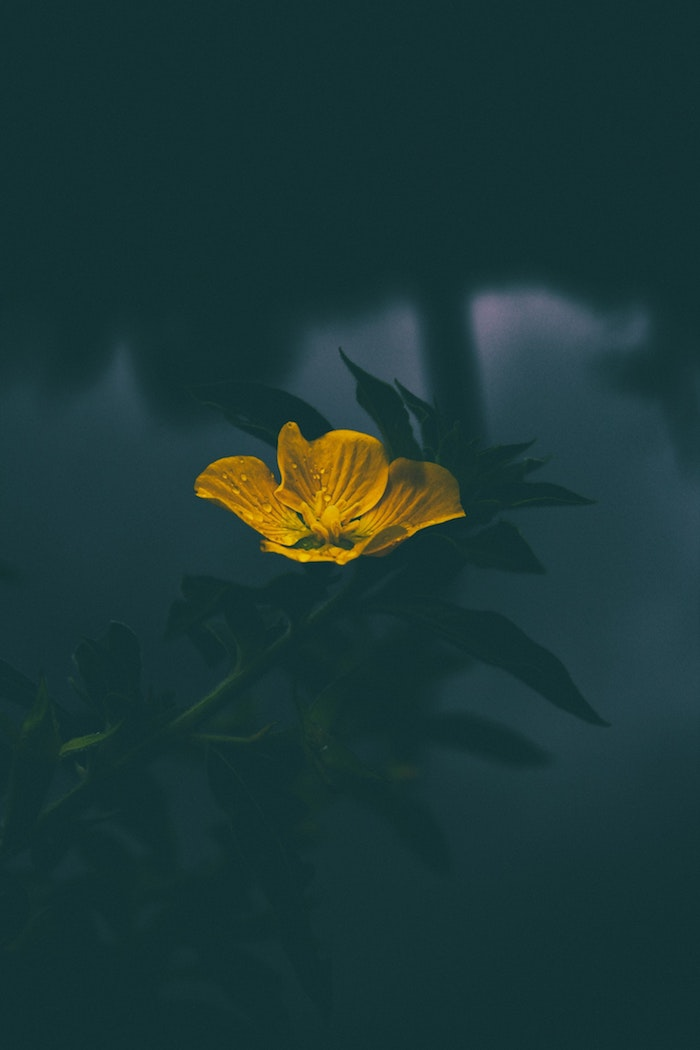 Printemps image pour fond d'écran jolie photo bouquet de fleurs eau jaune fleur