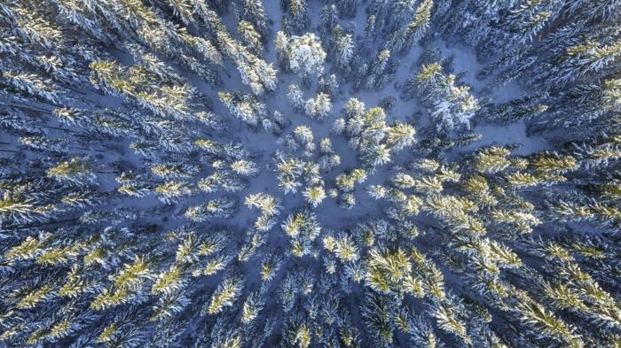 fond ecran paysage, paysage paradisiaque avec des arbres en neige dans une foret, fond ecran paysage, iles paradisiaques