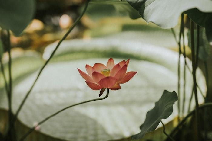 1001 Images Pour Un Fond D Ecran Fleur Magique