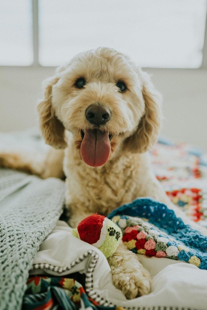 Fond d'écran original fond d'écran printemps quelle photo choisir chien mignon