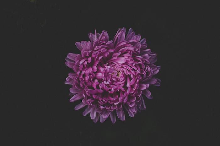 Photo fleurs photo bouquet de fleurs image de fleur pivoine de haut vue violet fleur