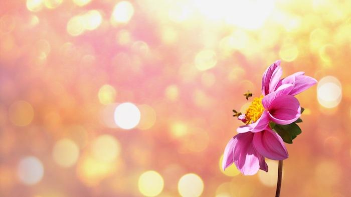 Quel fond d'écran rose fleur fond d'écran fleurs de printemps fond d'écran fleur