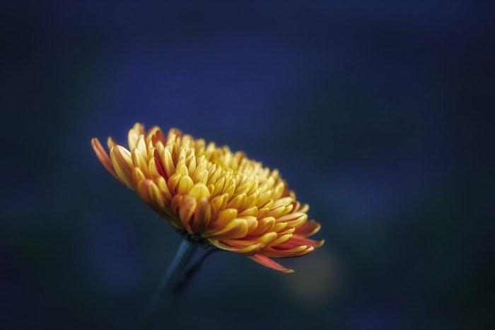 Image des fleurs rouges fond de fleur photos admirables