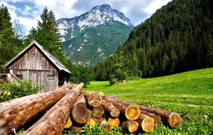 cabine de bois dans la forêt d'arbres conifères qui donne une vue vers les collines de montagnes enneigées, wallpaper fond d écran nature