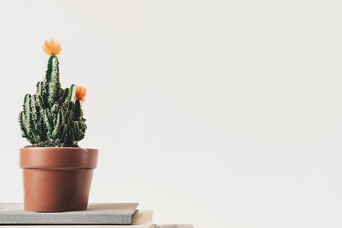 Fond ecran gratuit printemps fleurs fond ecran jardin cactus fleurie