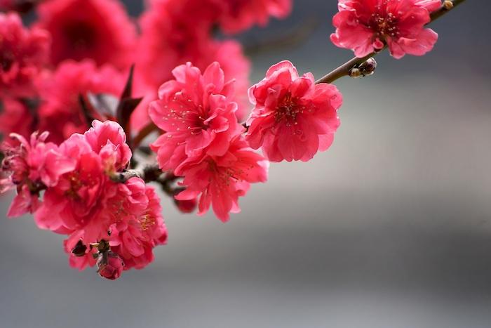 Magnifique fond d'écran fleur rose image de rose branche fleurie avec fleurs roses fond d'écran fleur
