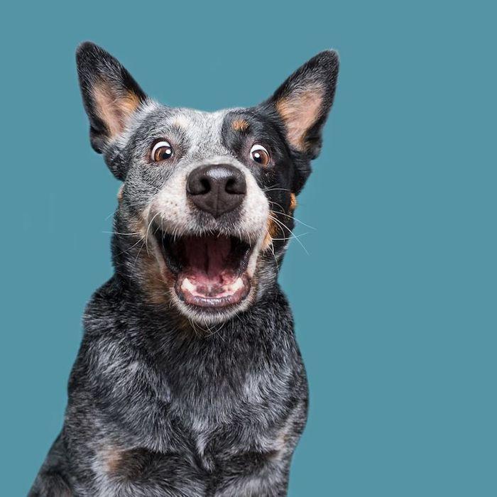 Cool fond d'écran iphone drole fond d'écran drole gratuit desktop amusement chien souriant