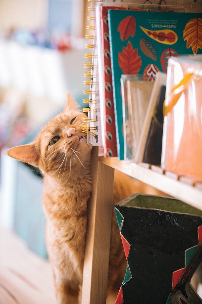 Amusant fond d'écran animaux drole fond d'écran trop drole hd amusante photo chaton mignon bibliotheque