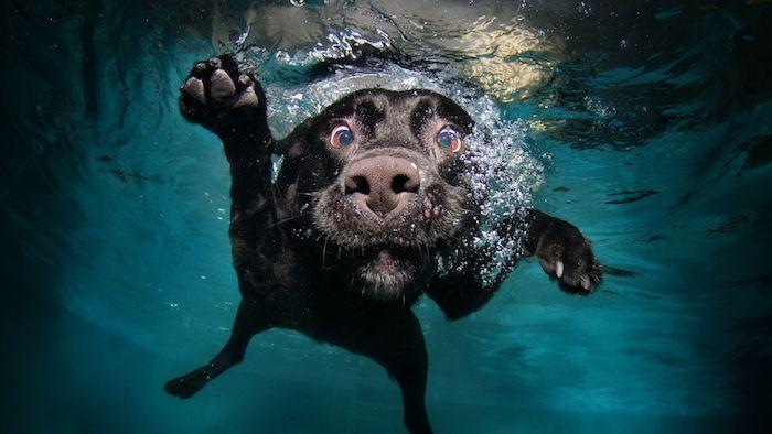 Chouette fond d'écran magnifique fond d'écran humour fond ecran drole photo chien qui nage