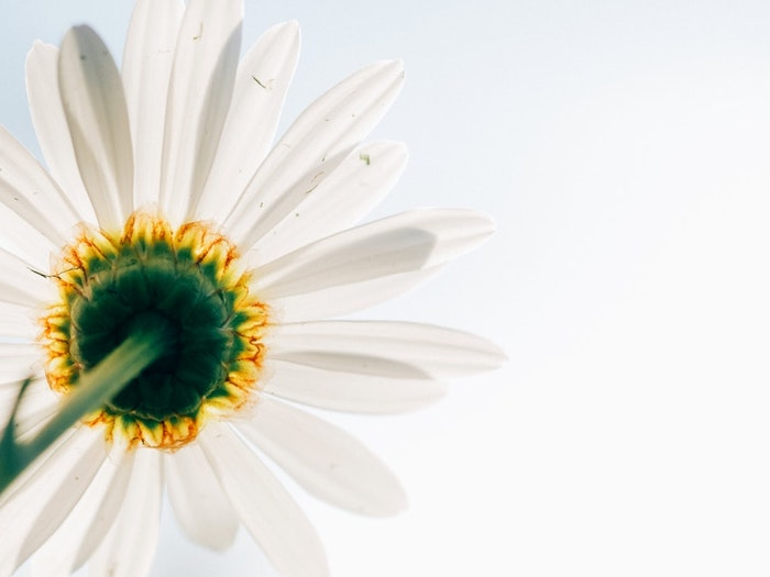Belle photo pour fond d'écran fond ecran gratuit printemps blanche fleur view de bas