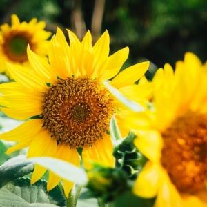 Le fond d'écran fleur qui donne de grands sourires