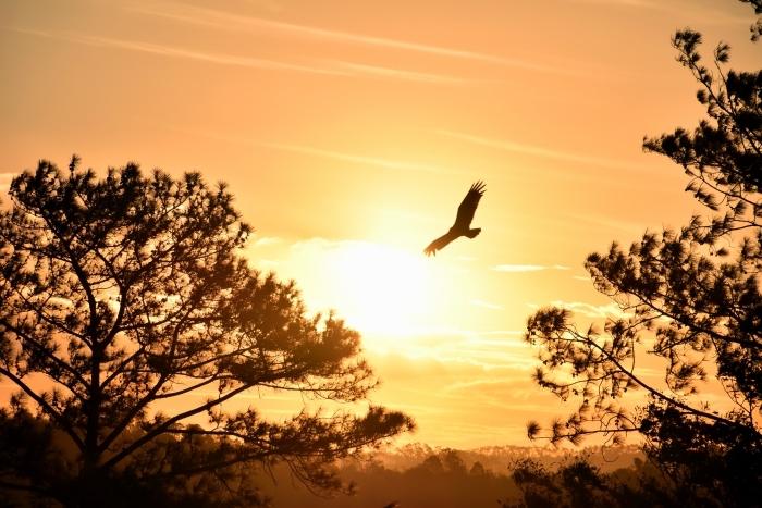 wallpaper fond d écran avec ciel jaune aux rayons de soleil, photo d'arbres et du ciel avec oiseau volant et vue vers les montagnes lointaines