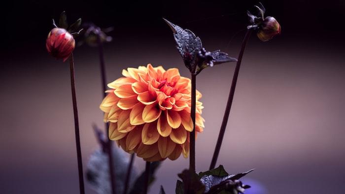 Arrière plan fleurs onds ecran gratuit fleurs idée theme fleur