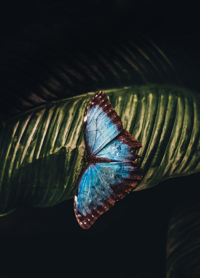 Picture fond d'écran été papillon bleu sur feuille vert fond d'écran plant vert et papillon belle photo
