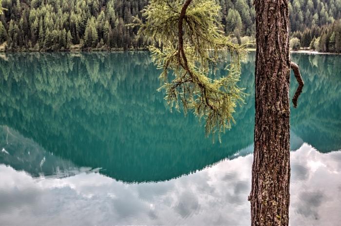 wallpaper fond d écran naturel avec paysage vert au bord d'un lac et forêt d'arbres conifères, paysage de lac aux reflets du ciel