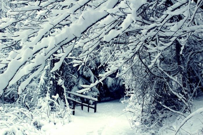 arbres avec des branches appesanties par la neige, paysage paradisiaque, foret en neige avec le début d'un pont qu'on devine