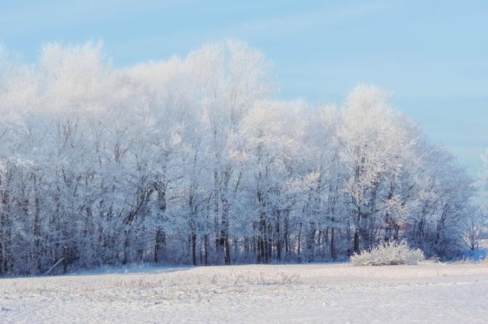 arbres en neige, paysage paradisiaque, sol couvert de neige, ciel en bleu pastel, destination paradisiaque, endroit paisible, belle journée d'hiver, paysage paradisiaque